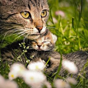 mother cat with a Tiny :) by Katka Kozáková - Animals - Cats Kittens ( cat, kitten, grass, daisies, welfare,  )