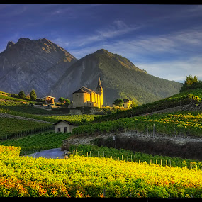 in the vineyard by Petr Klingr - Landscapes Mountains & Hills ( swiss, vineyard, village, church, hdr, sun, golden hour, sunset, sunrise )