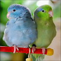 Talking Parrotlet icon