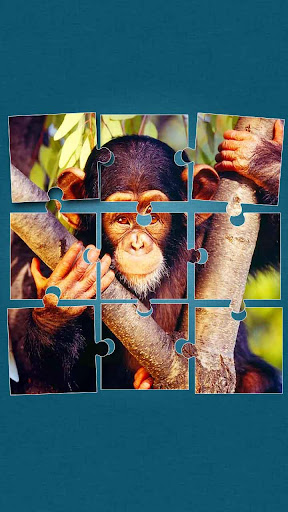 Jungle Animals Jigsaw Puzzle