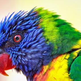 by Lou Plummer - Animals Birds