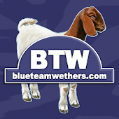 Blue Team Wethers