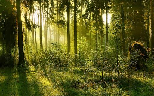 玩免費個人化APP|下載森の壁紙 app不用錢|硬是要APP