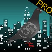 City Dove Pro