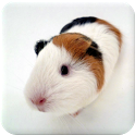 Guinea Pig Manual icon