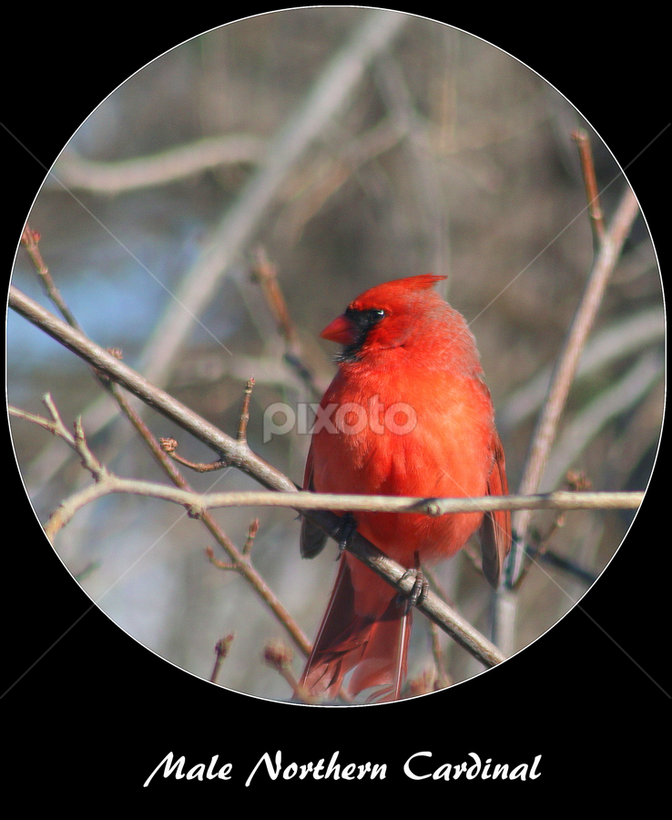 Backyard Birds Nice Profile Captioned Photos Typography Pixoto