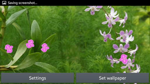 蘭花動畫壁紙|玩個人化App免費|玩APPs