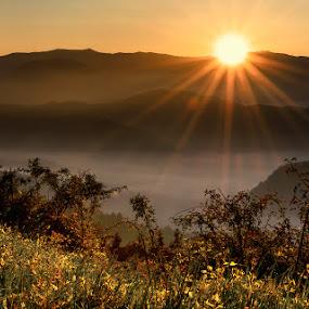 Morning by Geanina Boureanu - Landscapes Sunsets & Sunrises ( nature, lanscape, sunrise, morning )