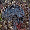 Abandoned hornet nest