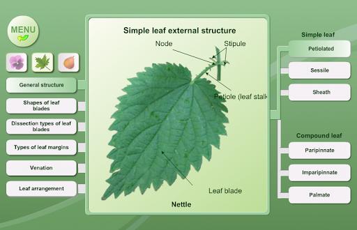 玩免費書籍APP|下載生物學。植物形態 app不用錢|硬是要APP