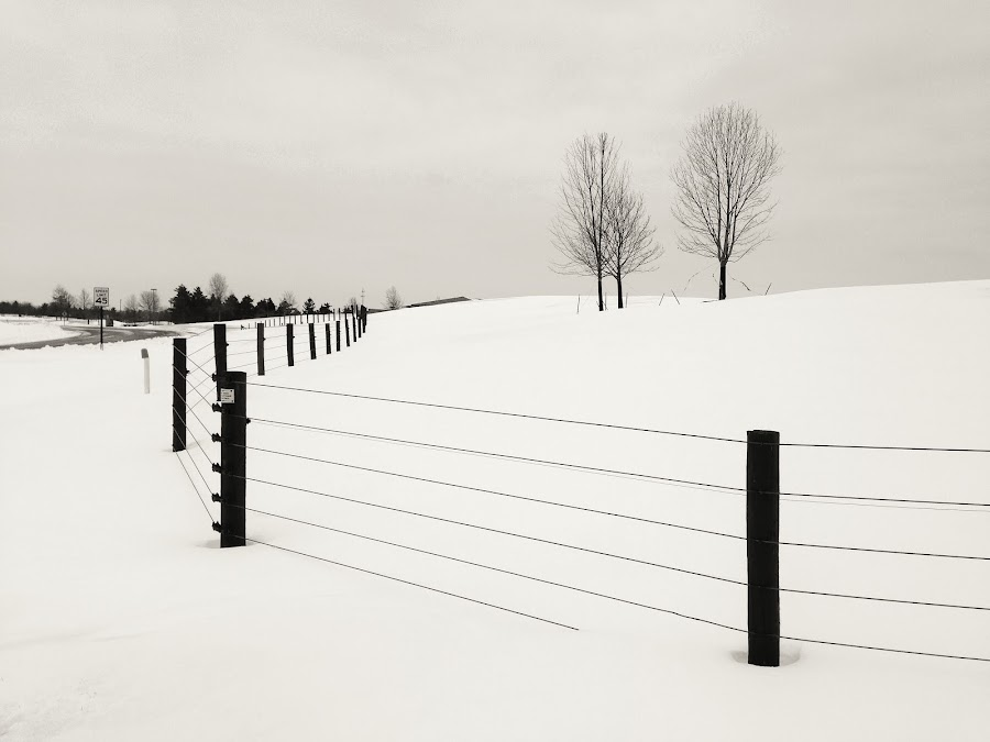 Separated by Bhumsoo Kim - Black & White Landscapes ( fence, winter, ann arbor, snow, minimalism, trees )