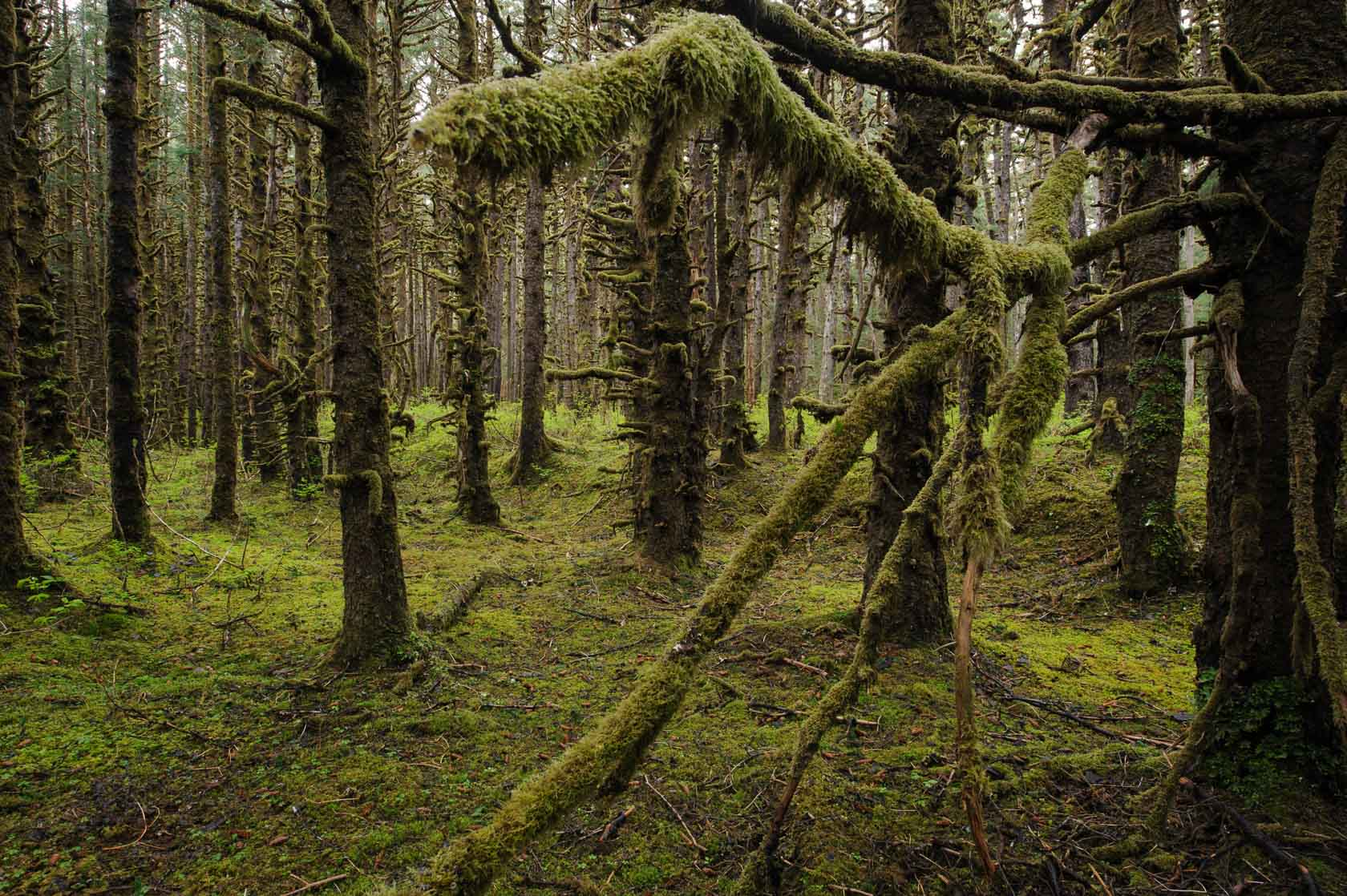 Coastal Rainforest, Yakutat, Alaska
