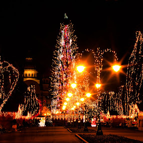 Christmas in my city by Valics Lehel - Public Holidays Christmas ( lights, tree, tirgu mures, christmas, romania, city, mood, mood factory, holiday, hanukkah, red, green, artifical, lighting, colors, Kwanzaa, blue, black, celebrate, tis the season, festive,  )