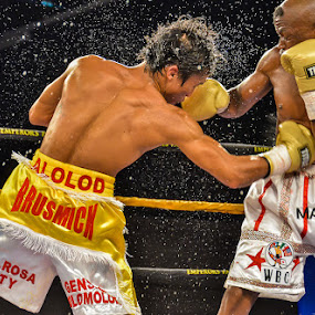 The fight by Alexius van der Westhuizen - Sports & Fitness Boxing ( golden gloves, man cave, nkosanathi joyi, lounge, action, sport, boxing, emperor's palace, sportsbar, bar, ringside, alolod )