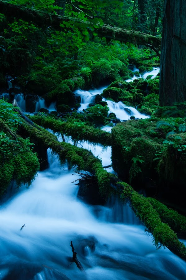 On the Way by Jerry Winn - Landscapes Forests ( oregon, columbia_gorge,  )