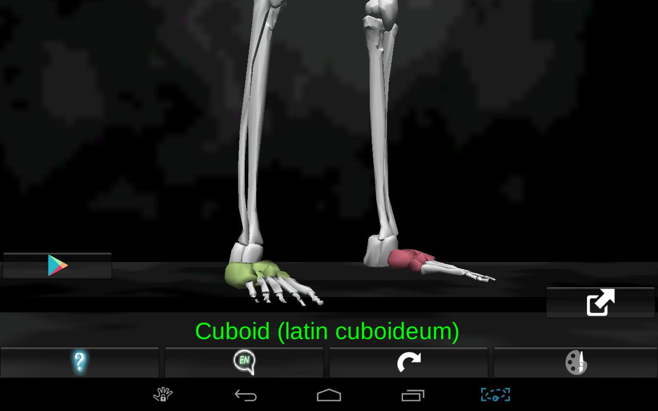 Bones Human 3D (anatomy) - screenshot