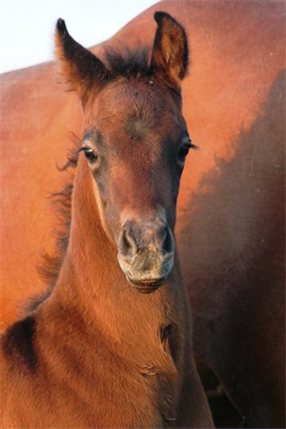 Newman Equine