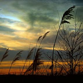 by Tatjana Koljensic - Landscapes Sunsets & Sunrises