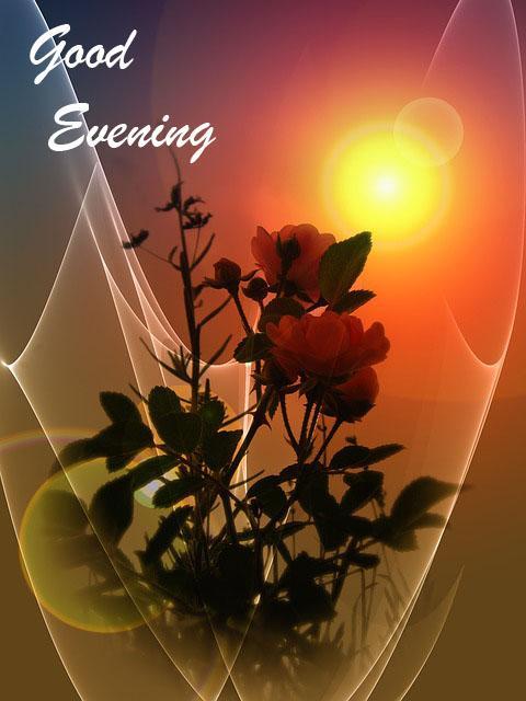 Good Evening Whatsapp Greetings Gallery