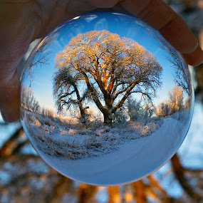 Snow Globe by Johnny Gomez - Artistic Objects Other Objects ( winter, crystal ball, snow, frost, snow globe, landscape )