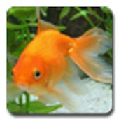 aniPet Goldfish LiveWallpaper
