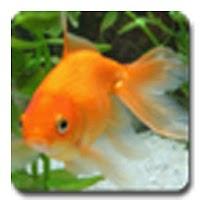 aniPet Goldfish LiveWallpaper 1.0.4