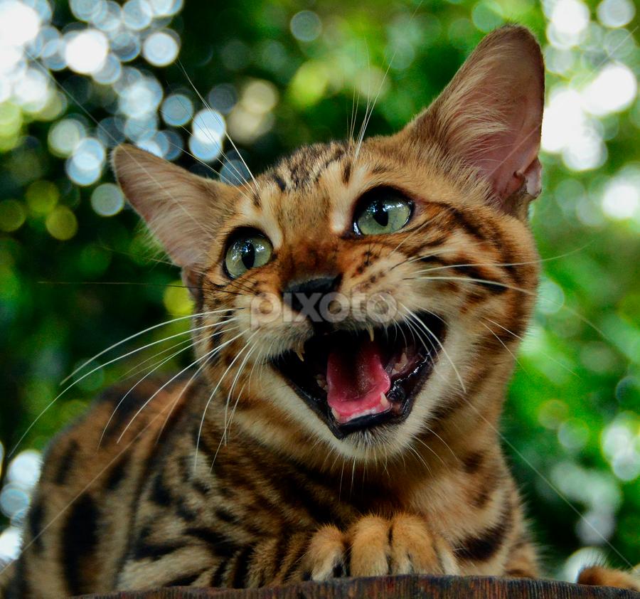 by Neni Wijaya - Animals - Cats Portraits ( bekasi, ciketing, my cat, mygarden, animal, #GARYFONGPETS, #SHOWUSYOURPETS )