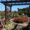 Ocean Knoll Elementary Garden