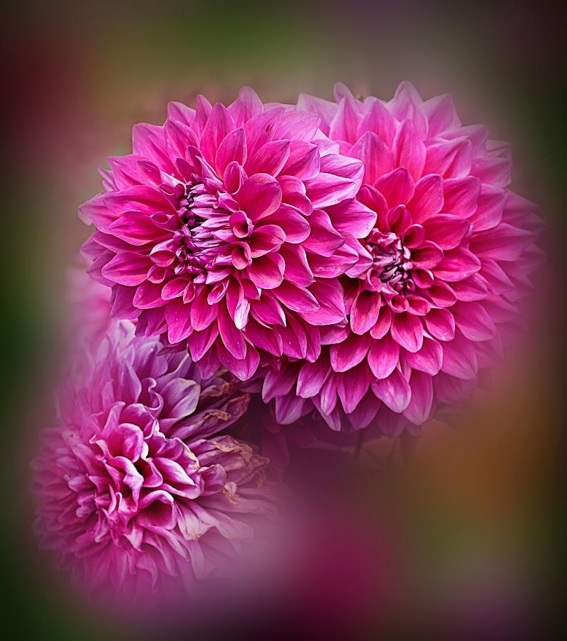 Flower by Shobin George - Flowers Flower Arangements ( flower )