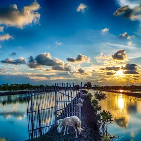kambing by Dugalan Poto - Landscapes Sunsets & Sunrises ( balongan, fishpond, indonesia, sunset, dugalan, pond, tegal,  )