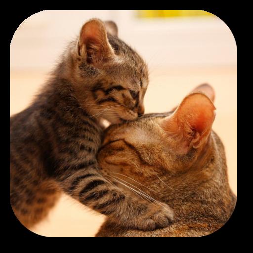 超可爱猫咪动态壁纸 個人化 App LOGO-APP開箱王
