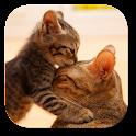 So Cute кошечка Живые обои icon