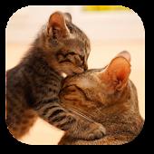 So Cute Cat Live Wallpaper