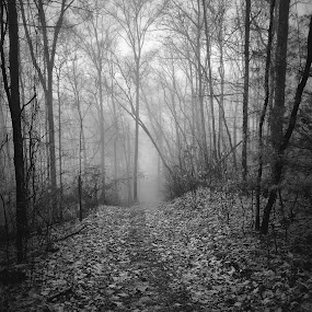 Central Trail Fog, 2015.01.04 by Aaron Campbell - Instagram & Mobile iPhone ( blackandwhite, foggy, nature, fog, iphone6plus, outdoors, luzernecounty, atmosphere, pennsylvania, nepa, backmountain )