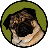 Pugzie Cute Pug Live Wallpaper