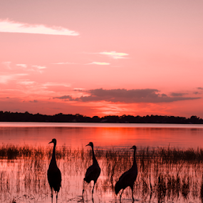 untitled by David Ubach - Landscapes Waterscapes ( grass, sunset, silhouettes, lake, birds )
