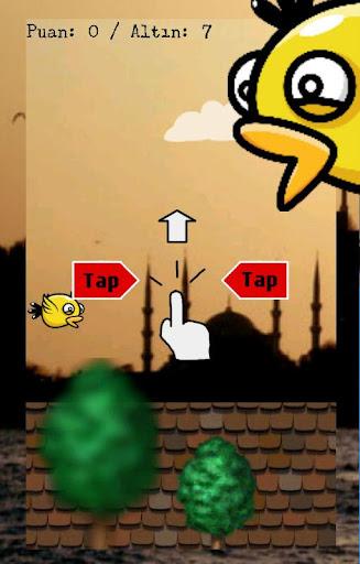 Maceracı Kuş İstanbulda