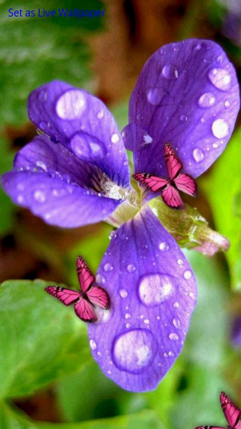 Flower & Colorful Butterflies- screenshot