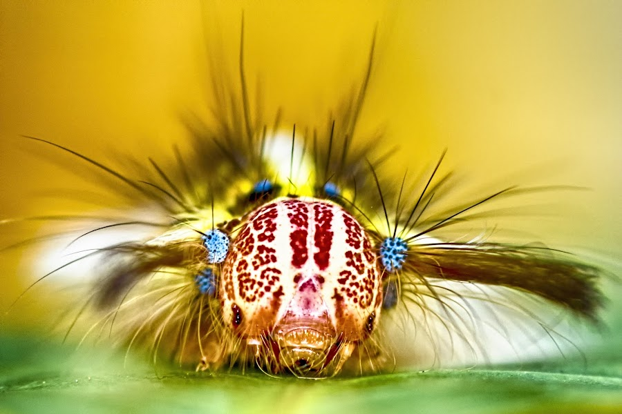 New Hairstyle by William Ho - Animals Insects & Spiders