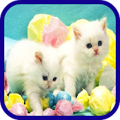 Pet Shop Cats Free Games