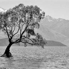 Stand by Jason Weigner - Black & White Landscapes ( water, mountain, nature, tree, black and white, lake, landscape, new zealand, , b&w, relax, tranquil, relaxing, tranquility )