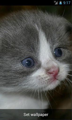 Live Wallpaper Kittens