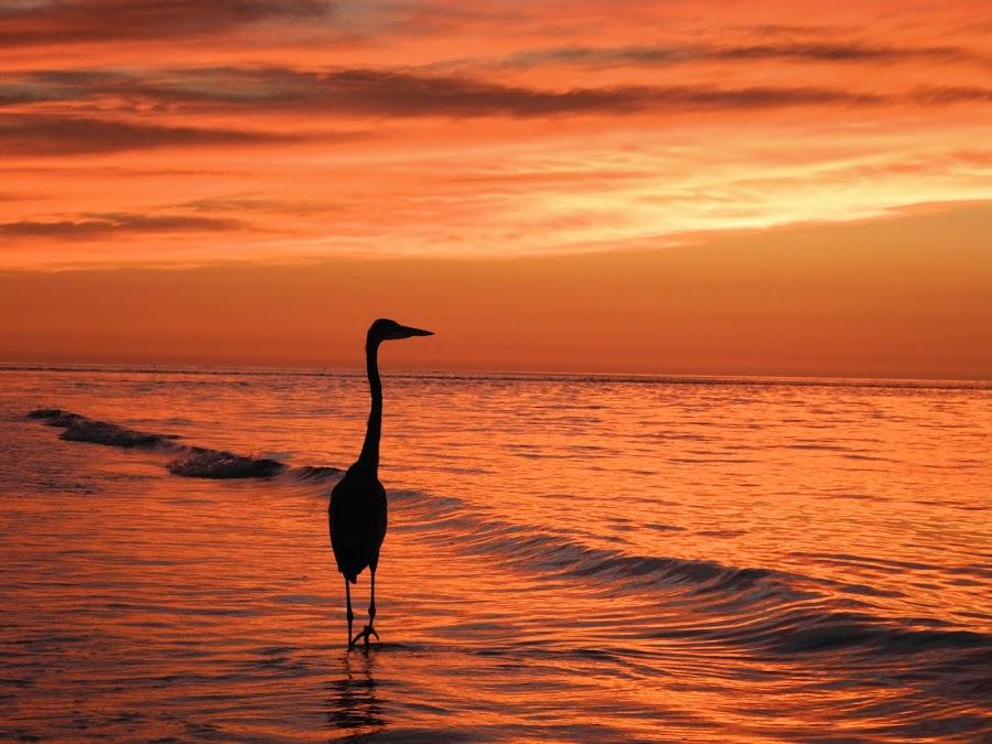 by Philip Jones - Landscapes Beaches (  )