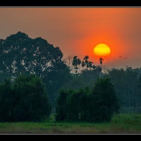 The Sun and Birds  by Dungrau FôTô - Landscapes Sunsets & Sunrises