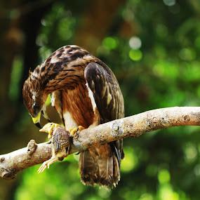 Dog eats dog? Bird eats bird. by Blue Bell Bantigue - Animals Birds
