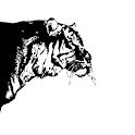 虎ブラ! icon