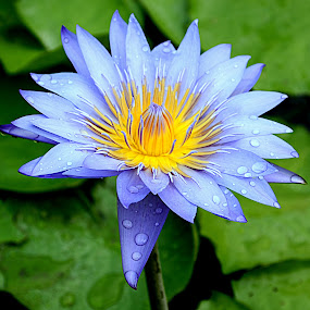 by Adi Adlee - Flowers Single Flower
