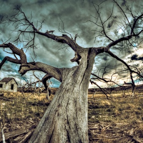 One Tree by Dave Zuhr - Nature Up Close Trees & Bushes ( tree, d_zuhr, dzuhr, lonely )