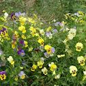 Catflowers