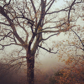Fog  by Alessandra  Romano  - Instagram & Mobile Android ( red, fog, autumn )
